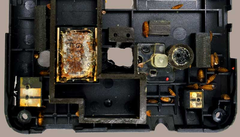 Maggots found in phone during digital forensic examination